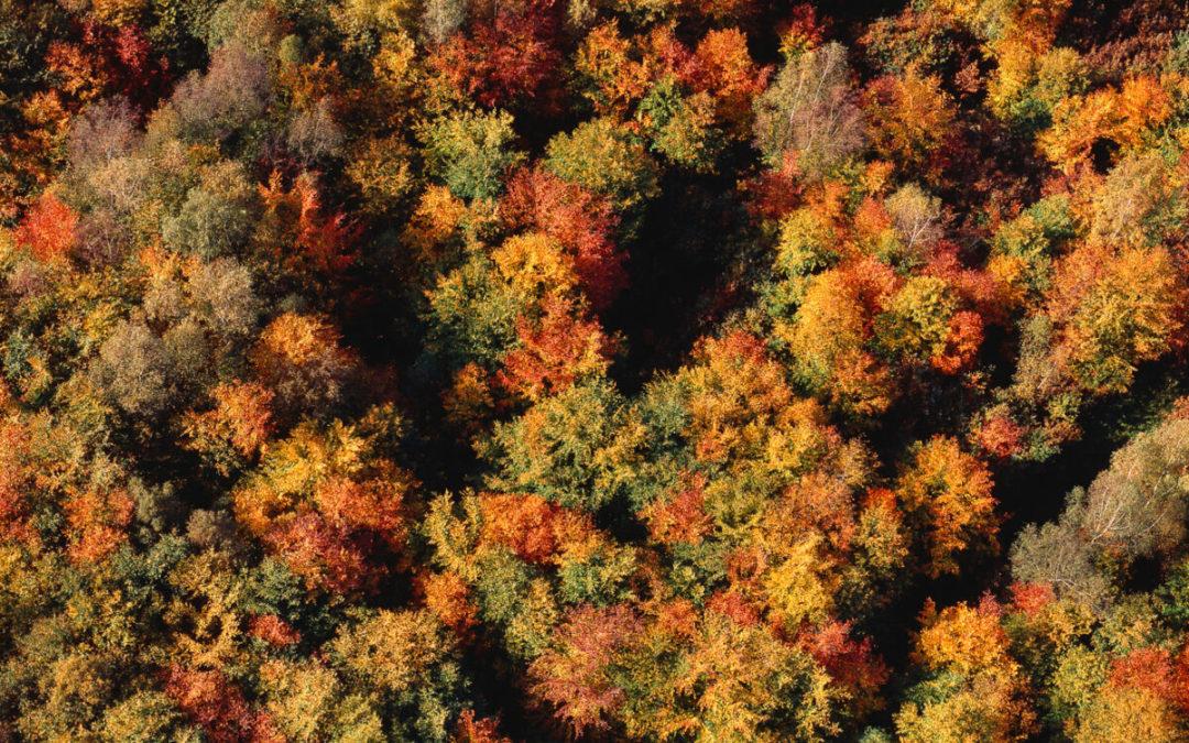 Le rêve fou de Francis Hallé d'une nouvelle forêt primaire en Europe
