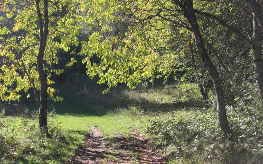 Enquête scientifique avec l'Université de Franche-Comté sur les effets des bains de forêt