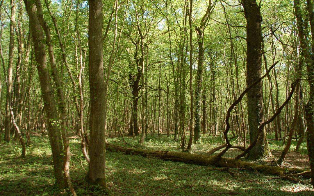 Le Département de Gironde institutionnalise les bains de forêt